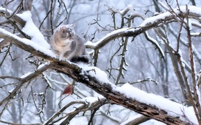 Picture snow, bird, grey cat, sitting on a branch