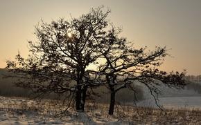 Picture winter, snow, landscape, tree