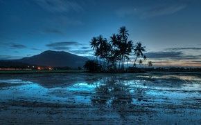 Picture the sky, water, clouds, light, sunset, lights, reflection, blue, palm trees, mountain, the evening, Malaysia, …