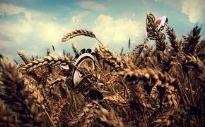Wallpaper treatment, wheat, field, clouds