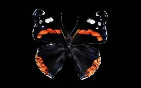 Wallpaper beauty, wings, butterfly