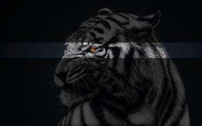 Picture Treatment, Tiger, Animals, Fretuior