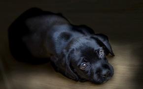 Wallpaper house, dog, puppy