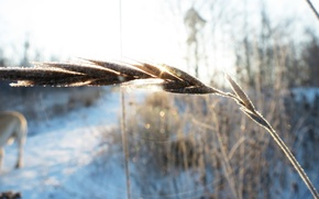 Picture macro, snow, ear, frost