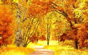 Picture road, autumn, leaves, trees, landscape, nature, yellow, orange, path