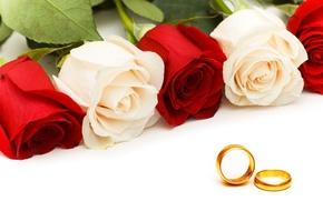 Picture roses, ring, rose, ring, wedding, Wedding