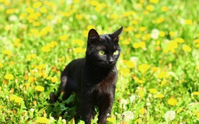 Picture animals, grass, cats