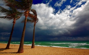 Picture sand, beach, water, clouds, clouds, palm trees, the wind, shore