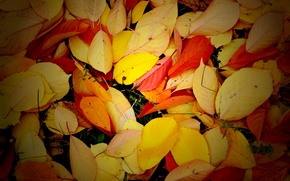 Picture autumn, leaves, texture, yellow, red