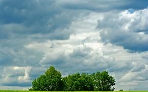 Wallpaper trees, field, Clouds