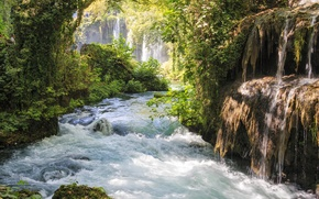 Picture forest, trees, river, stones, waterfall, stream