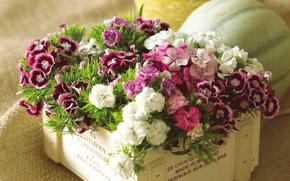 Picture flowers, box, bouquet, colorful, carnation