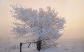Picture winter, frost, snow, tree, the fence, morning, frost