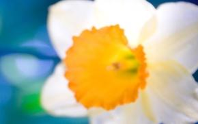 Picture white, orange, close-up