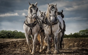 Picture work, horses, arable land