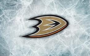 Picture hockey, NHL, hockey, nhl, Anaheim Ducks, Anaheim, Anaheim, Anaheim Ducks, Mighty Ducks, the mighty ducks, …