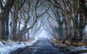 Picture road, autumn, snow, nature