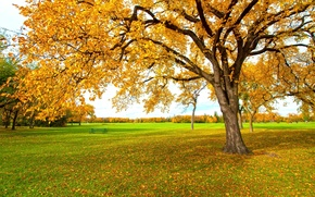 Picture autumn, leaves, yellow, tree
