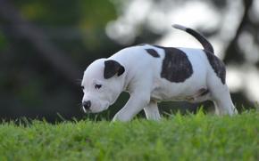 Picture dog, baby, puppy, walk