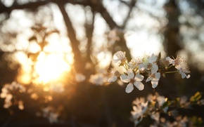 Picture spring, gold, the sun