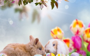 Picture flowers, animals, branch, rays, holiday, nature, rabbits, tulips, Easter, eggs, Easter, bokeh, the sky, spring