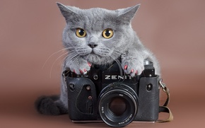 Picture cat, look, zenit