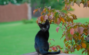 Picture leaves, branches, black kitten