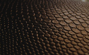 Picture macro, black, texture, leather, the transition, brown, chorology