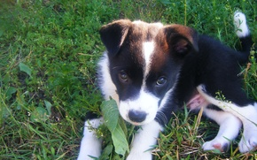 Picture grass, look, puppy
