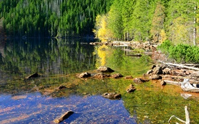 Picture forest, water, trees, lake, reflection, stones, Czech Republic, Sunny, driftwood