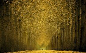 Picture Trees, Leaves, Alley, Gold