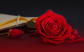 Picture style, roses, petals, book, buds