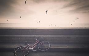 Picture bike, sea, seagulls