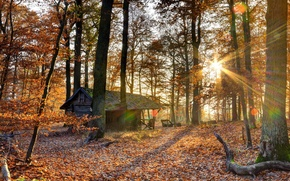 Picture forest, light, trees, house