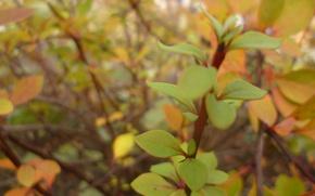 Picture Macro, Autumn, Garden, Foliage, Belarus