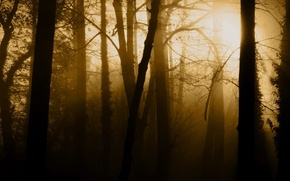 Picture trees, fog, the darkness, Sepia