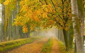 Picture road, autumn, fog, Park