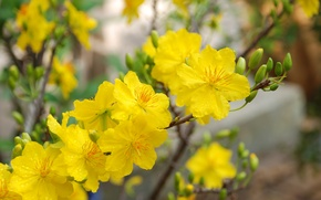 Picture yellow, blossom, flowers, Macro