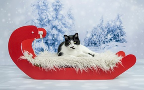 Picture cat, photoshoot, new year, cat's tale, Christmas, background, snow, lies, cat, red, ate, fur, black ...