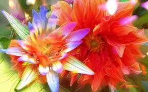 Picture line, flowers, nature, petals, garden, yard