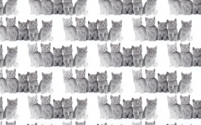 Picture background, texture, kitty, gray, Haze