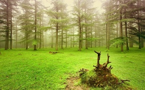 Picture green, grass, trees, nature, forests