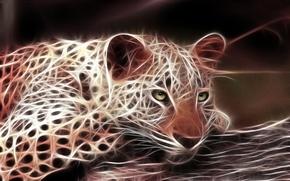 Wallpaper leopard, cat, predator