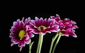 Picture background, paint, bouquet, petals, stem