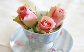 Picture flowers, roses, chashka, blyudce, butony, rozy