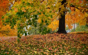 Picture autumn, trees, foliage