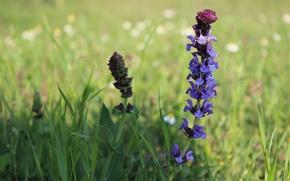 Picture field, flower, stem