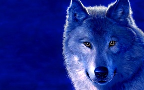 Picture blue, figure, wolf