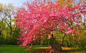 Picture the sky, Park, tree, spring, garden, flowering