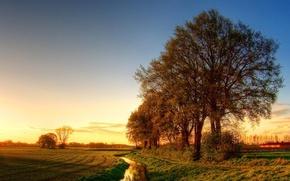 Wallpaper road, trees, landscape, sunset